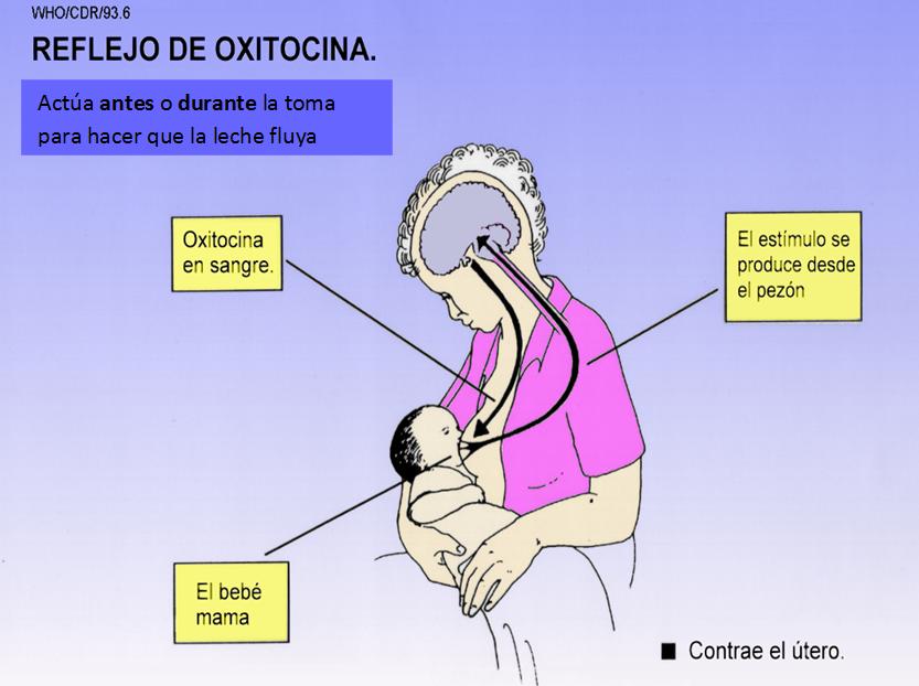 Continuum: Lactancia materna